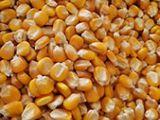 玉米粒展示